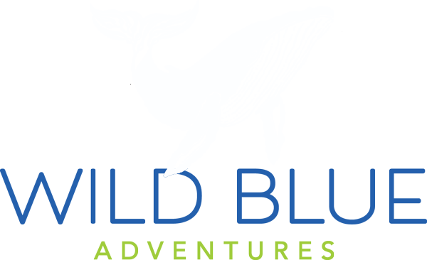 Wild Blue Adventures Kayaking Sea Caves