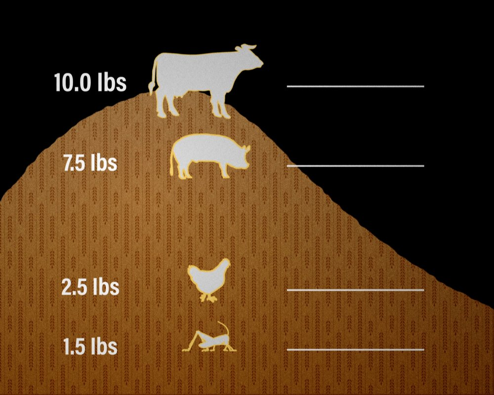 Bugs on the Menu 08 - Graphic breakdown of feed consumption of crickets versus chicken, pork, and beef. Photo Credit - Ian Toews.jpg