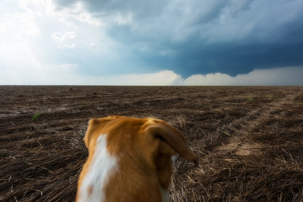 In the blink of an eye, it happened. A tornado has dropped down from our wall cloud and touched down in the perfect spot. Not a single home or city nearby. It's a beautiful moment as nature is putting on her best display and there's not a chance of anyone getting hurt or having their homes damaged.