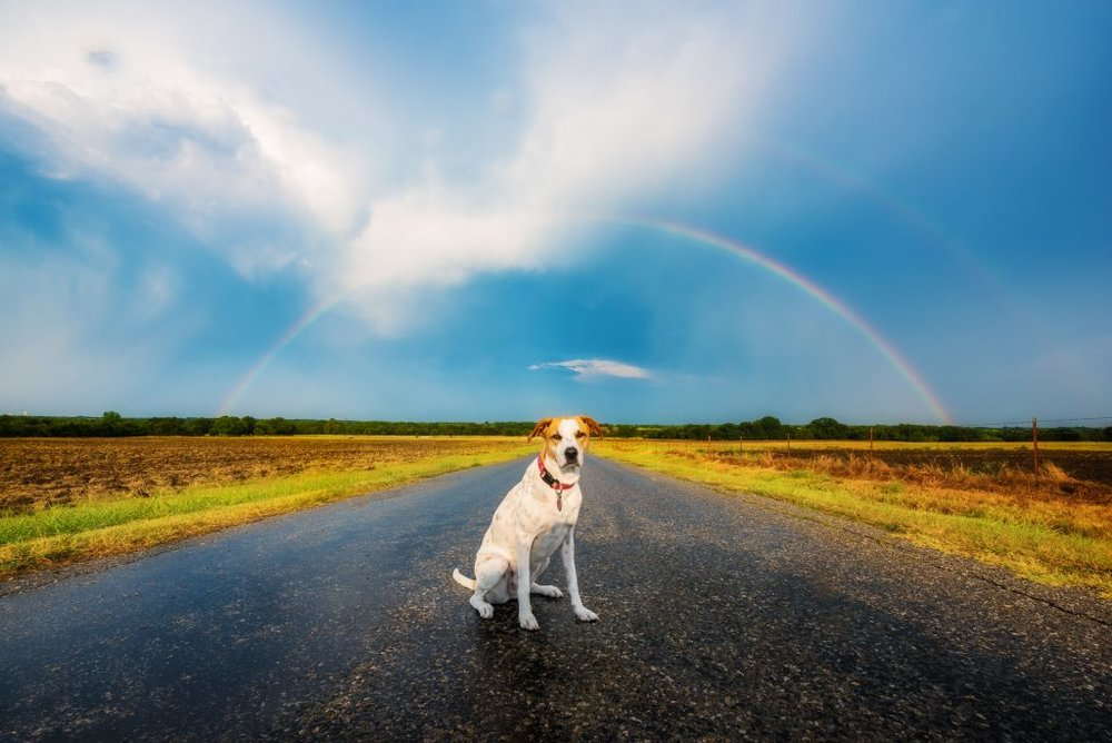 But first, Joplin has to take in a beautiful double rainbow and some incredible skies at sunset.