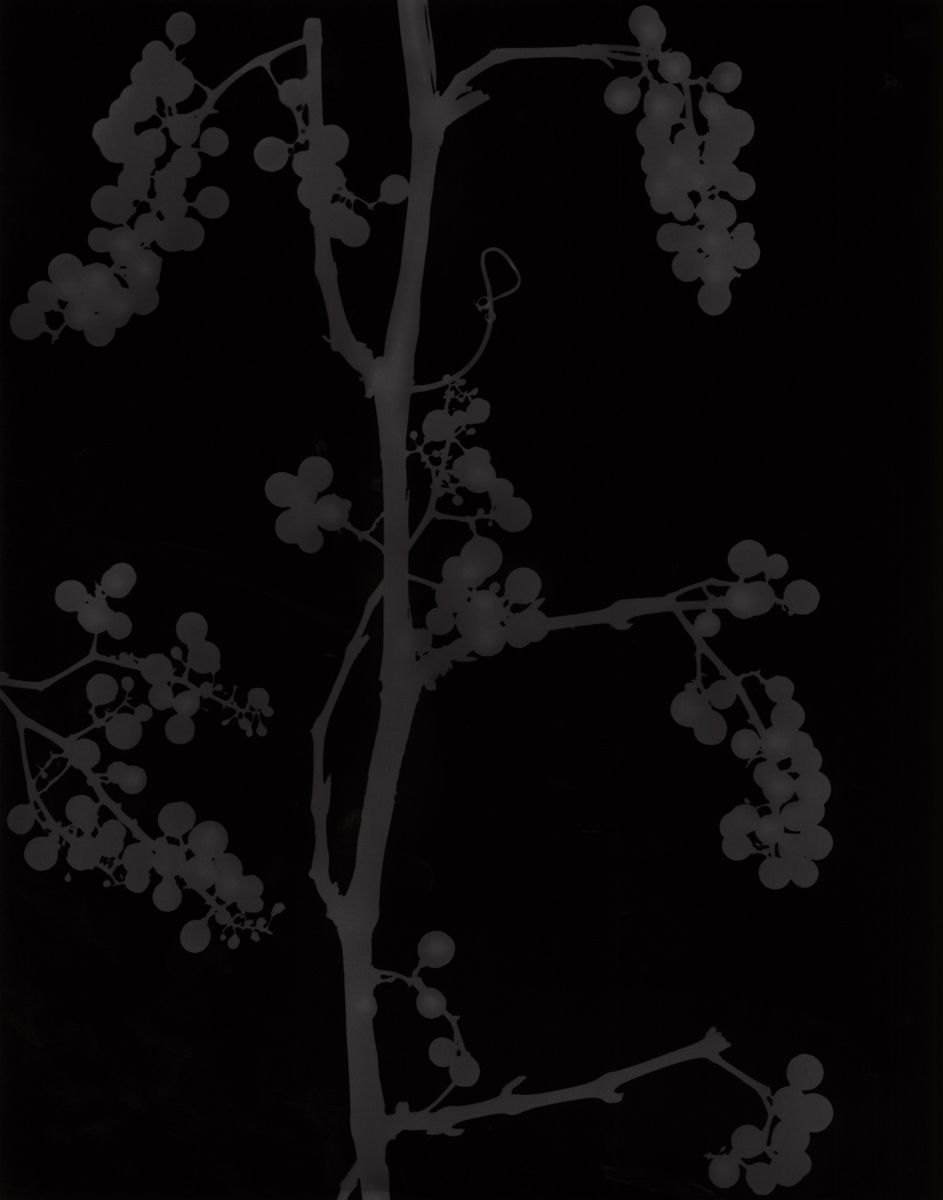 1. Untitled (dark #25). 2015. Photogram.