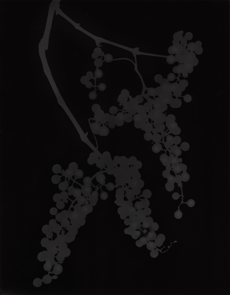 2. Untitled (dark #9). 2015. Photogram.