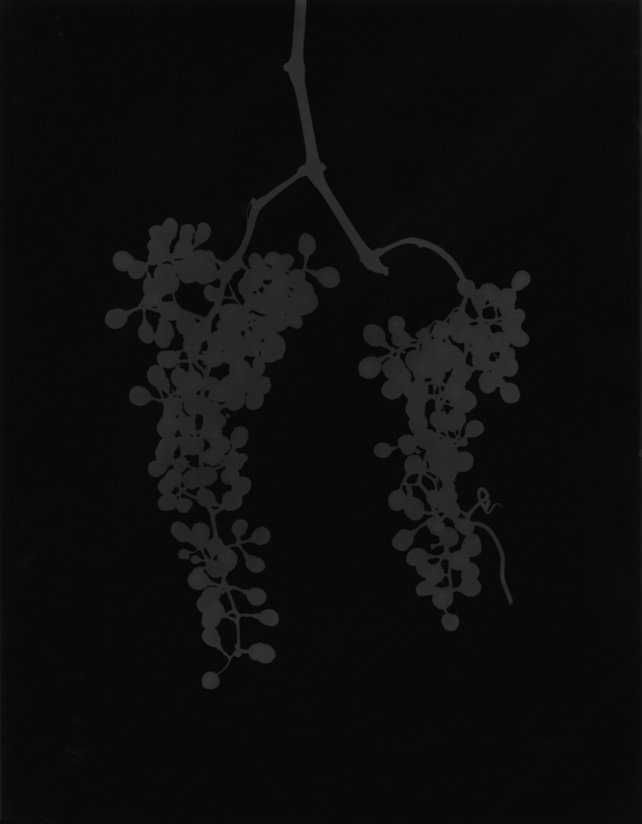 3. Untitled (dark #6). 2015. Photogram.