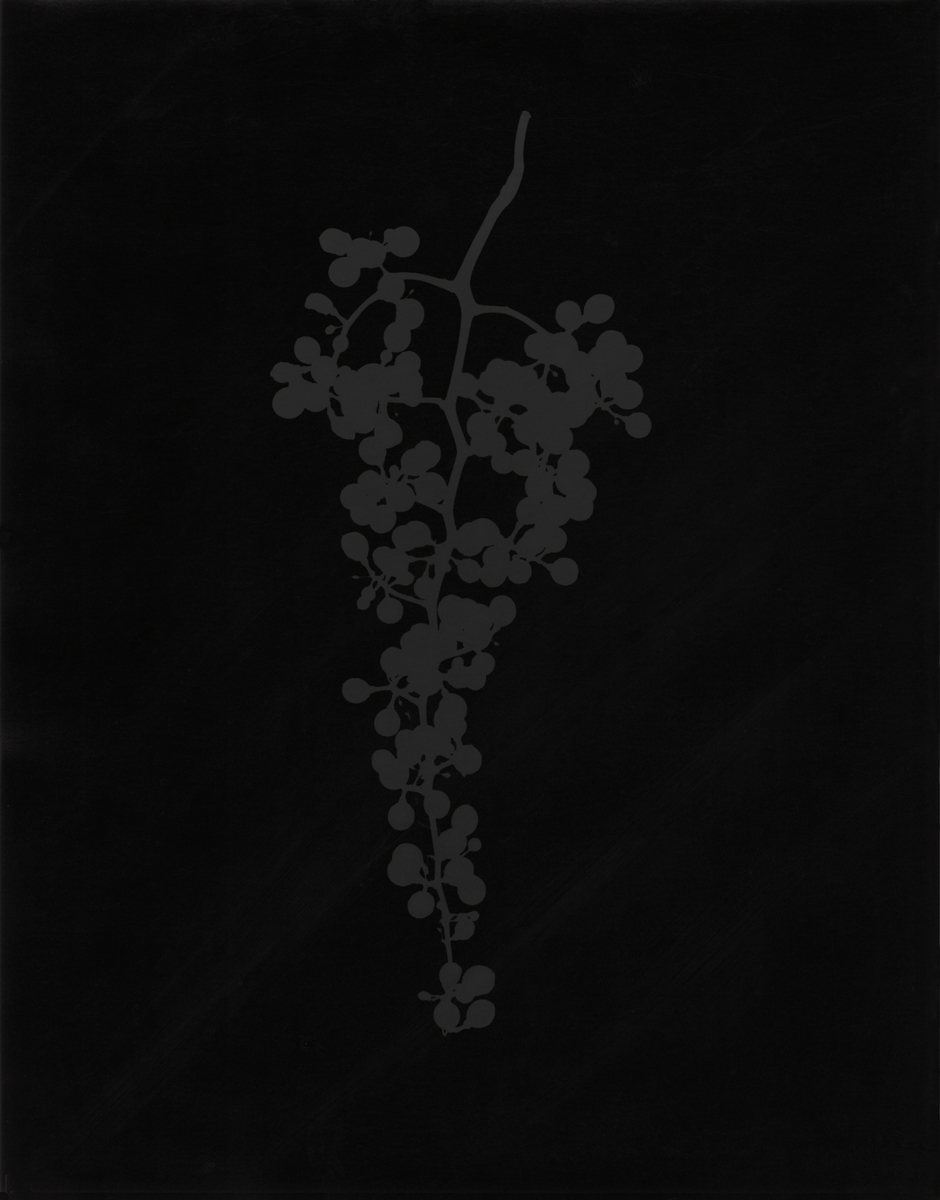 6. Untitled (dark #7). 2015. Photogram.