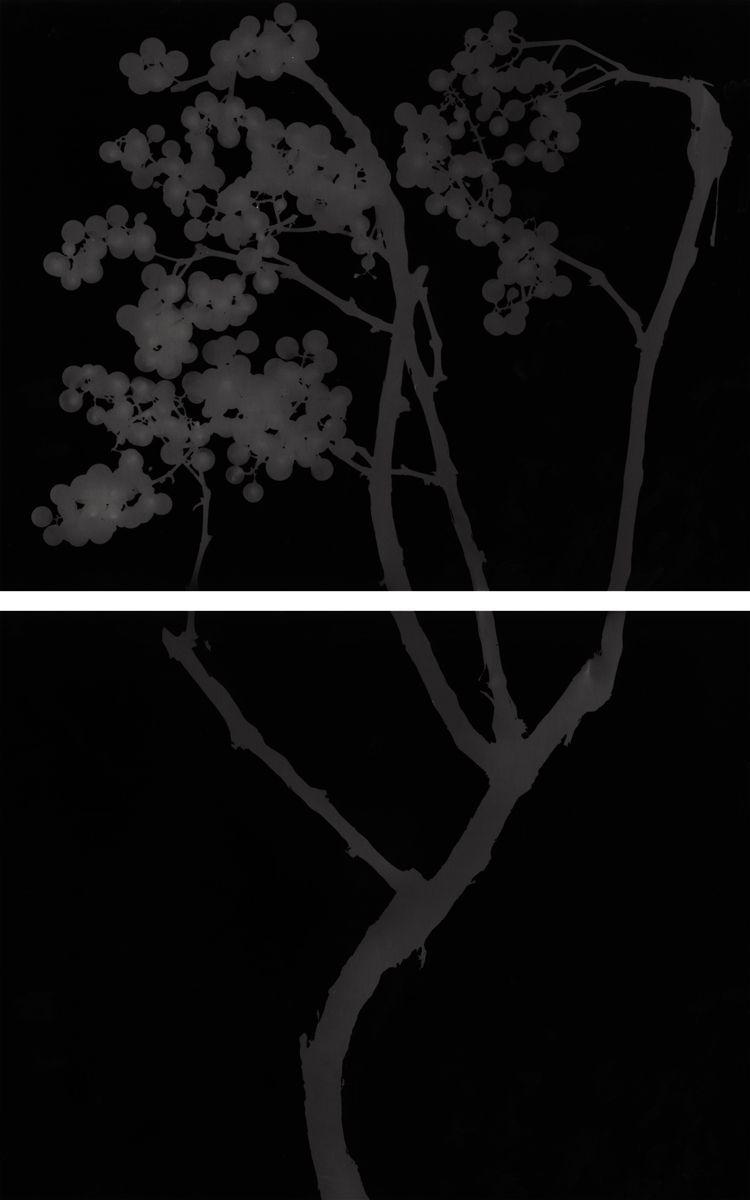 9. Untitled diptych (dark #8). 2015. Photogram.