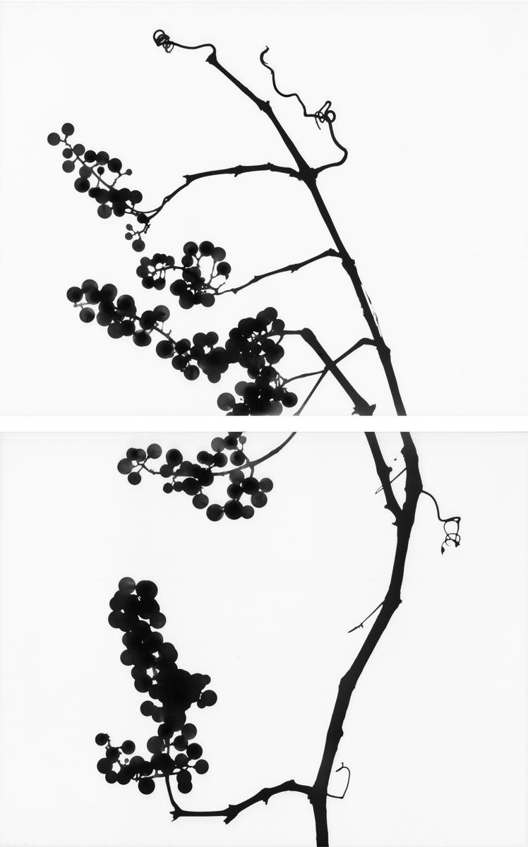 12. Untitled diptych (positive #14). 2015. Inkjet print.