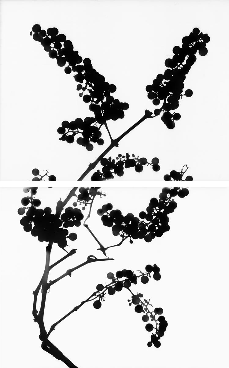 13. Untitled diptych (positive #13). 2015. Inkjet print.