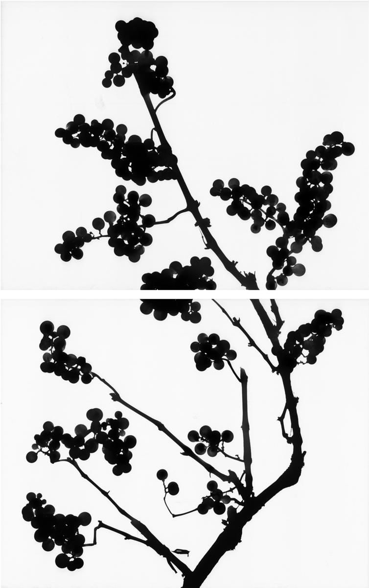 14. Untitled diptych (positive #10). 2015. Inkjet print.
