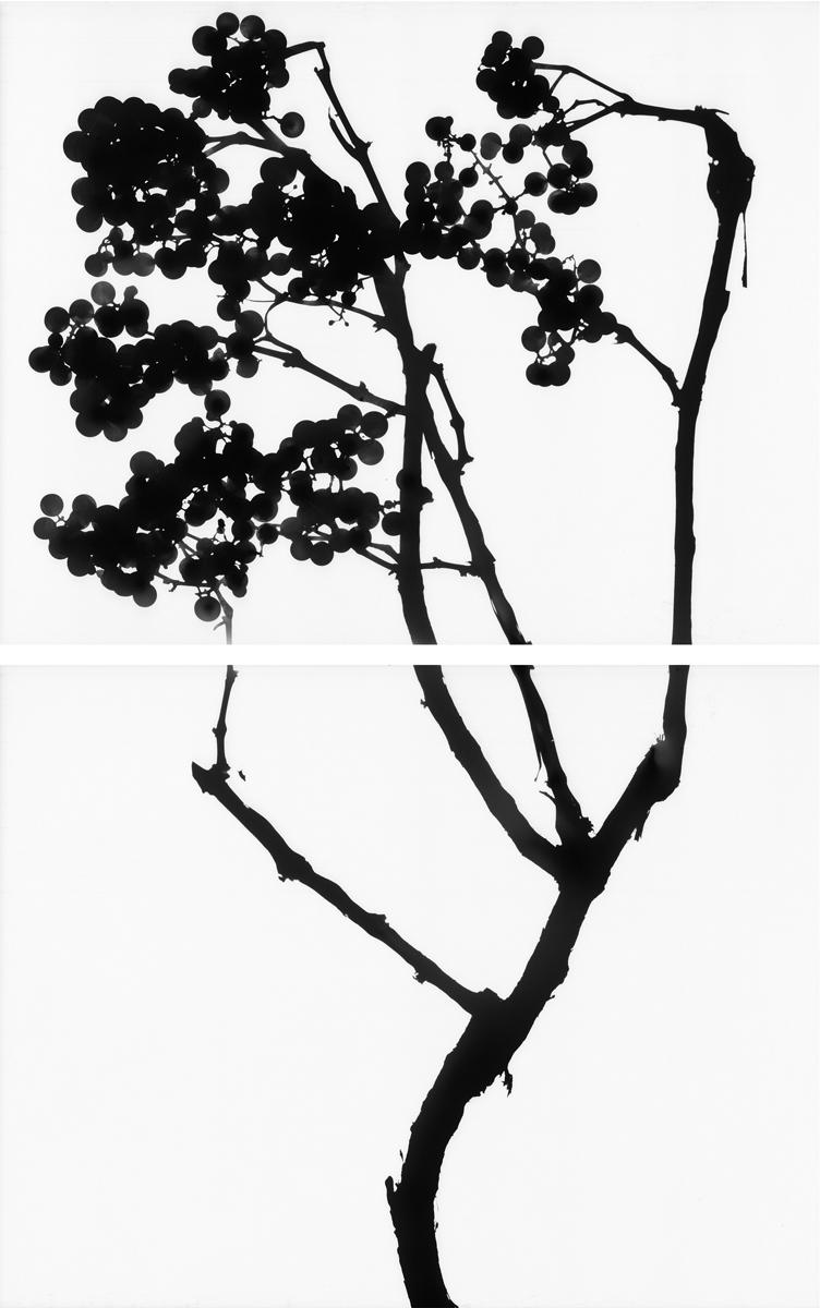 15. Untitled diptych (positive #9). 2015. Inkjet print.