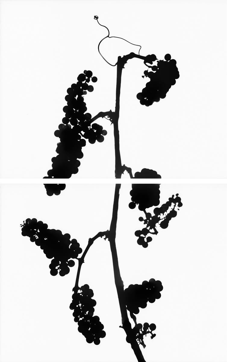 16. Untitled diptych (positive #4). 2015. Inkjet print.
