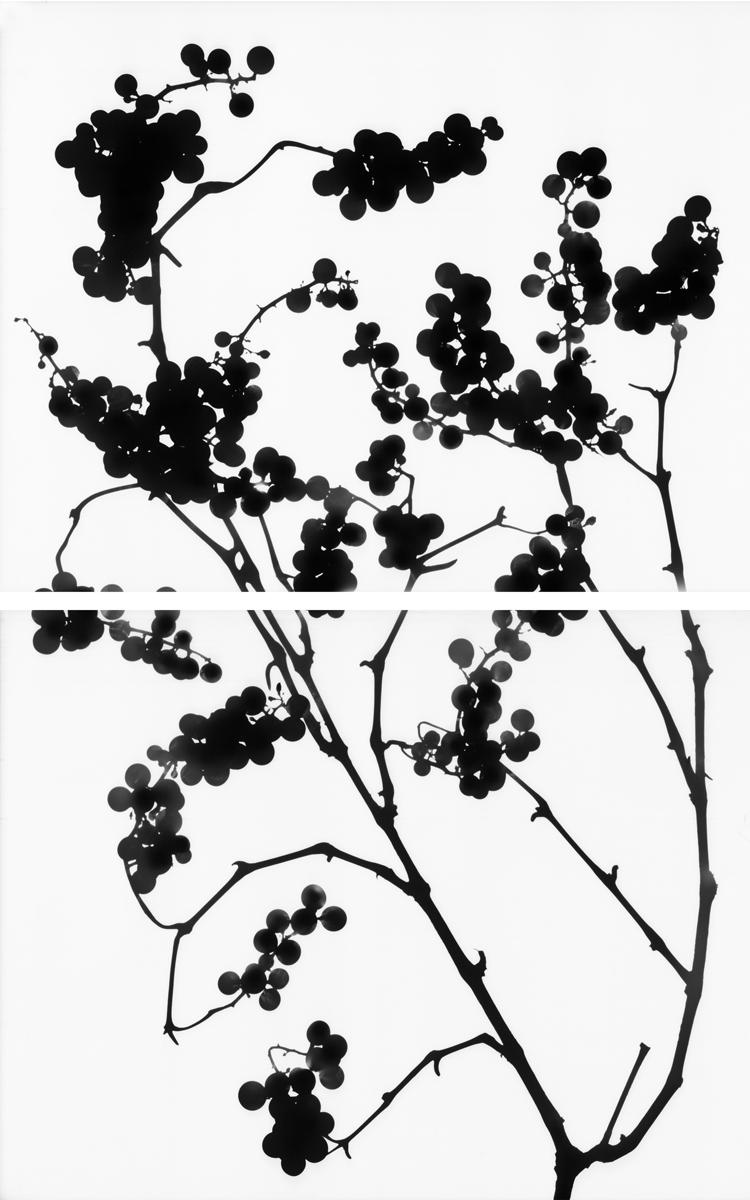 17. Untitled diptych (positive #12). 2015. Inkjet print.