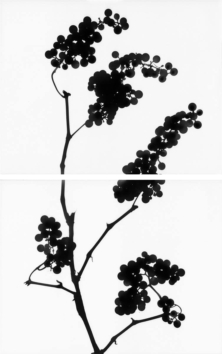 18. Untitled diptych (positive #6). 2015. Inkjet print.