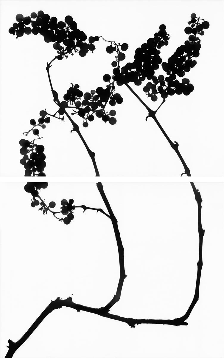 20. Untitled diptych (positive #11). 2015. Inkjet print.