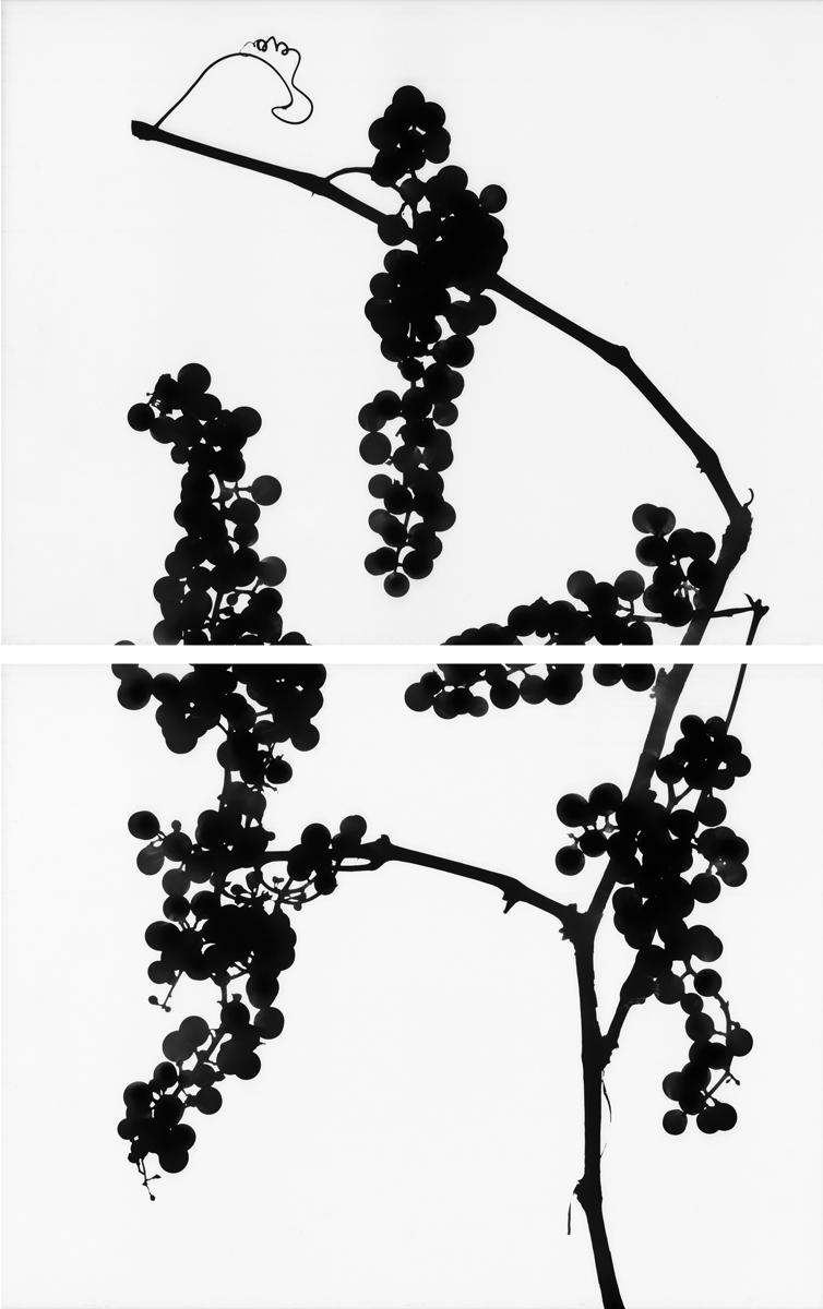 21. Untitled diptych (positive #7). 2015. Inkjet print.