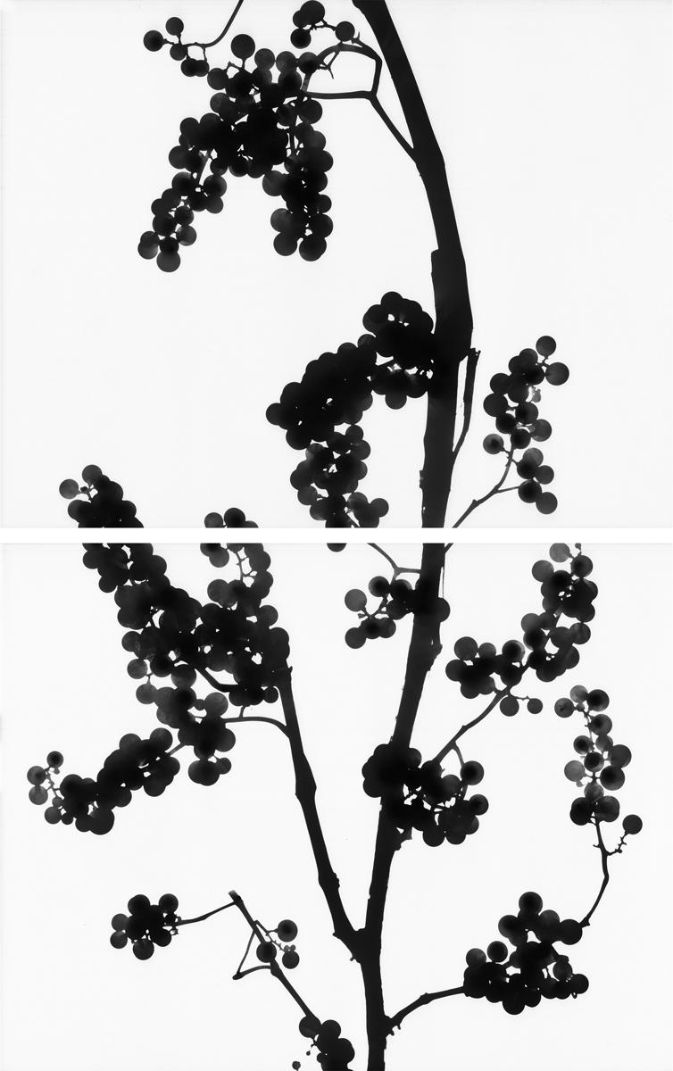 23. Untitled diptych (positive #2). 2015. Inkjet print.