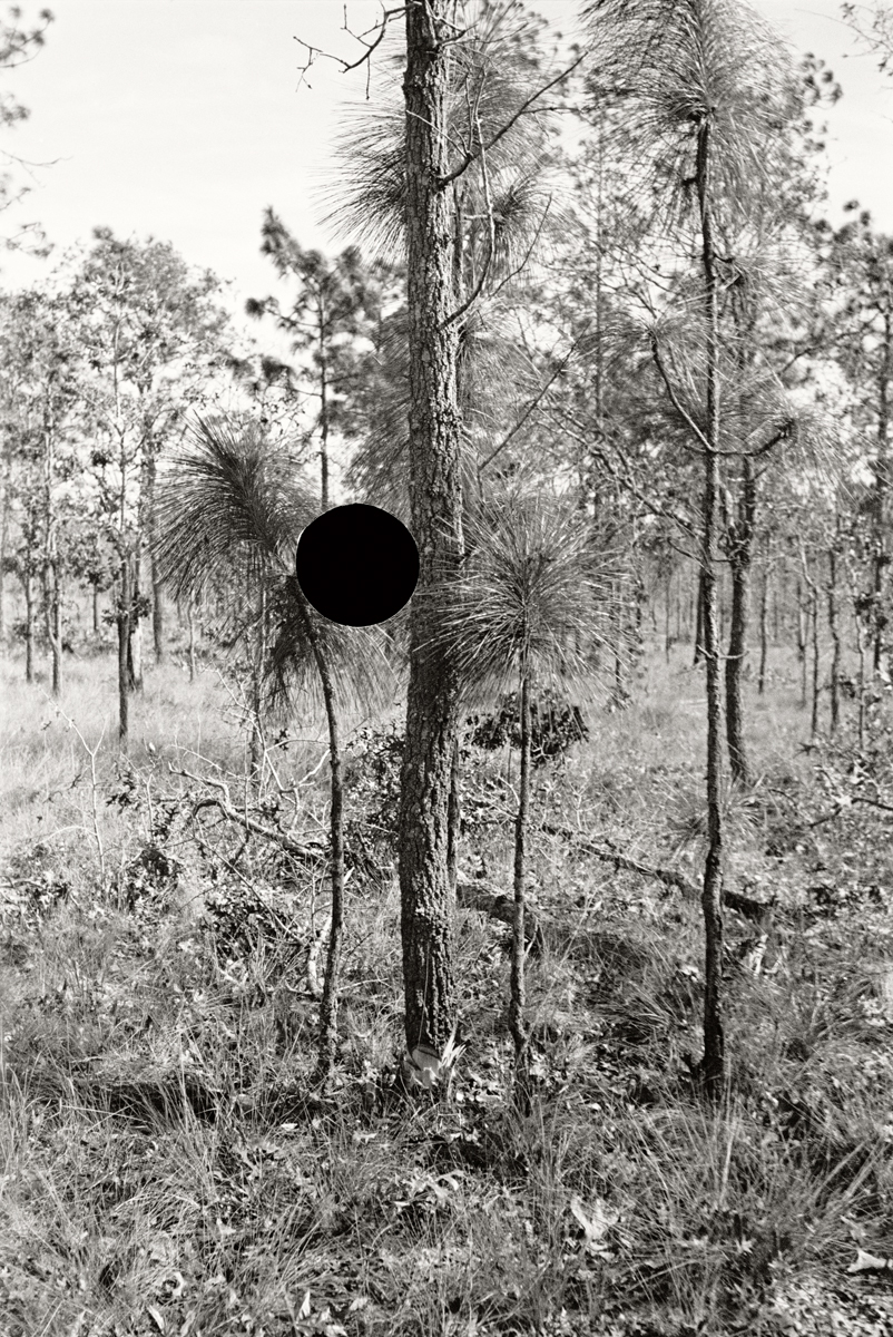 25. Blackjack Oak, Withlacoochee land use project. Florida. 1937. Arthur Rothstein. 8a08304.