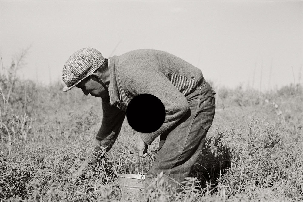 74. Blueberry picker, near Little Fork, Minnesota. 1937. Russell Lee. 8a21891.