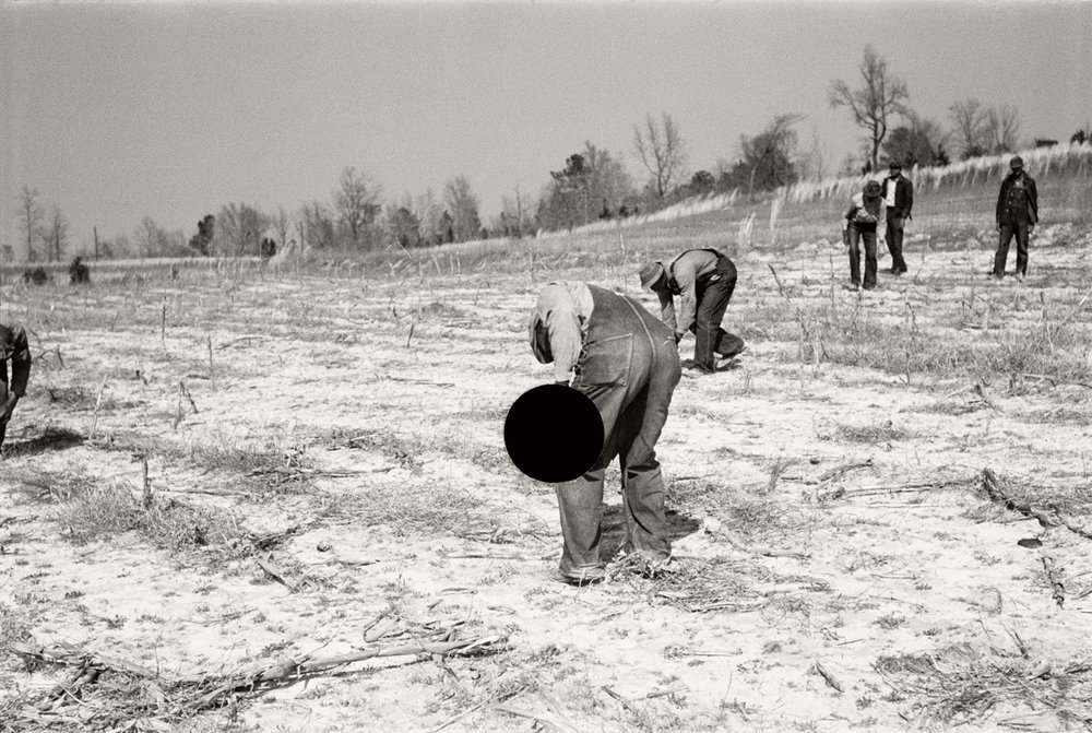 77. Planting slash pine, Macon County, Alabama. 1937. Arthur Rothstein. 8a08431.