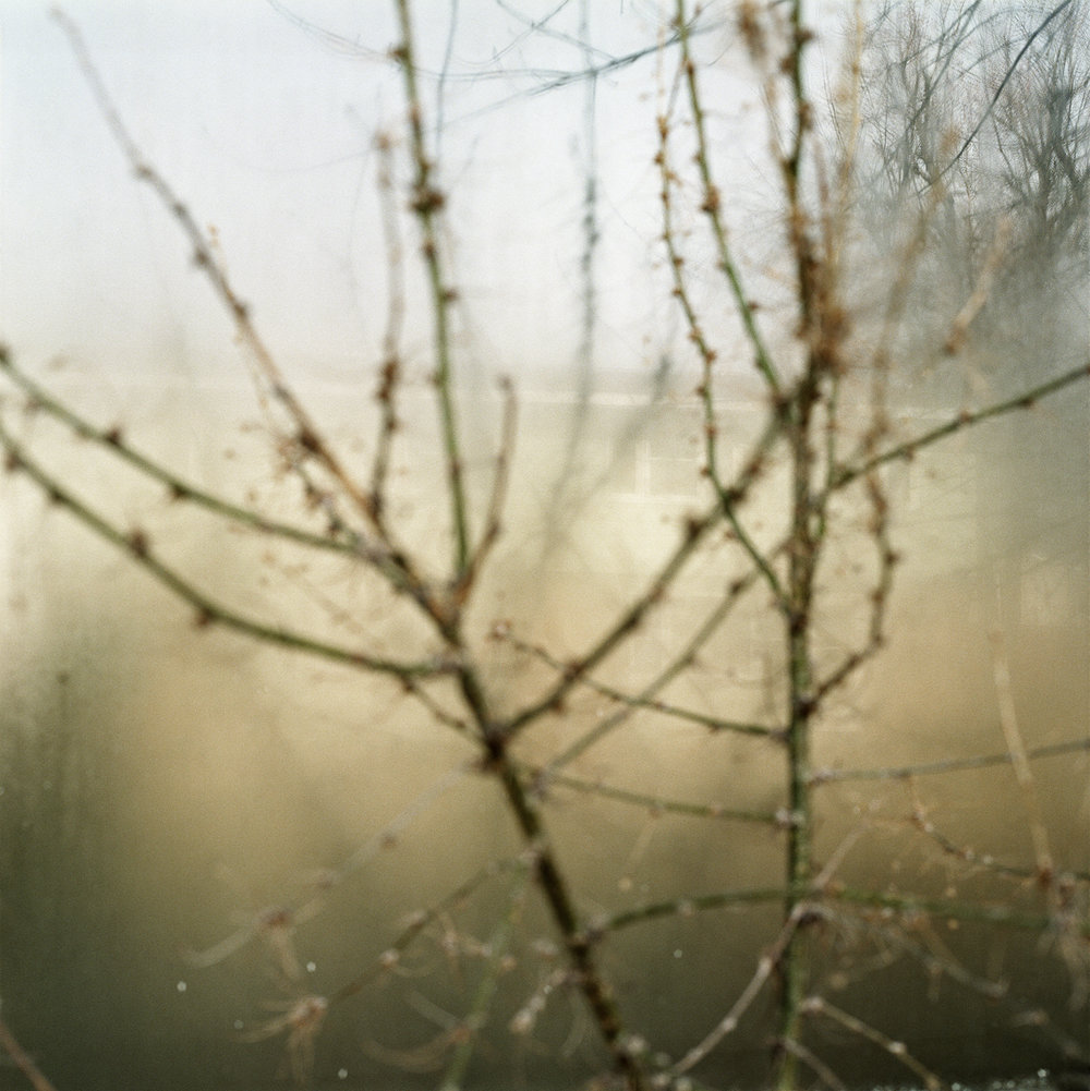 23. Untitled (Soft Branches). 2004. Archival Pigment Print.