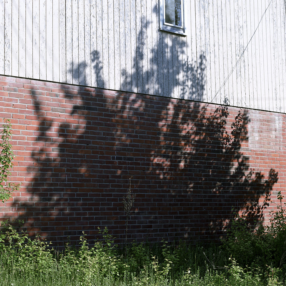 31. Untitled (Tree Shadow). 2004. Archival Pigment Print.