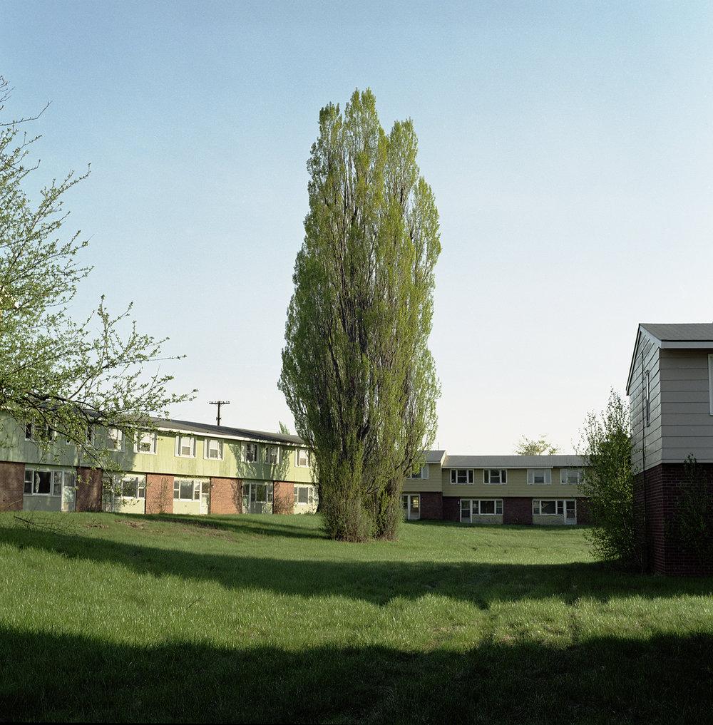 34. Untitled (Poplars). 2004. Archival Pigment Print.
