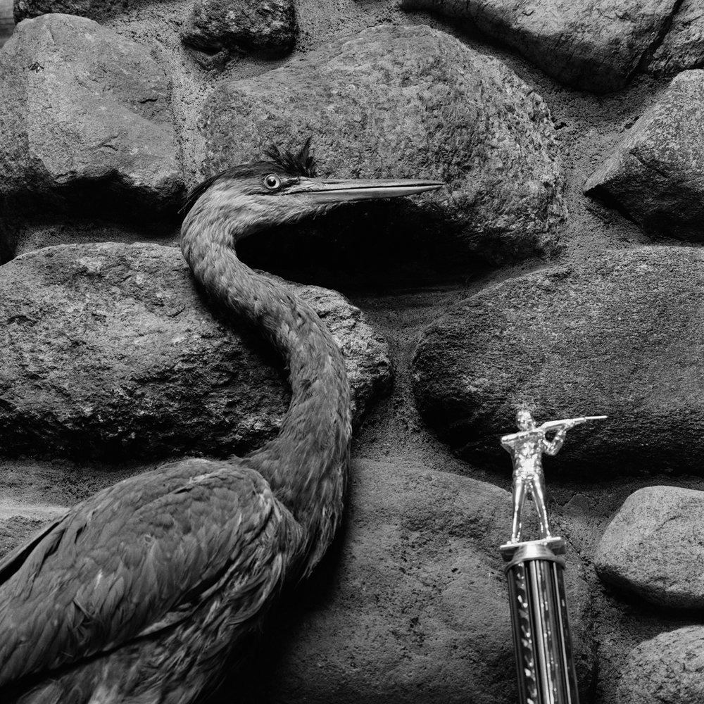 8. Blue Heron and Trophy, Rod and Game Club, Saranac Lake, NY. 2000. Toned Gelatin Silver Print.