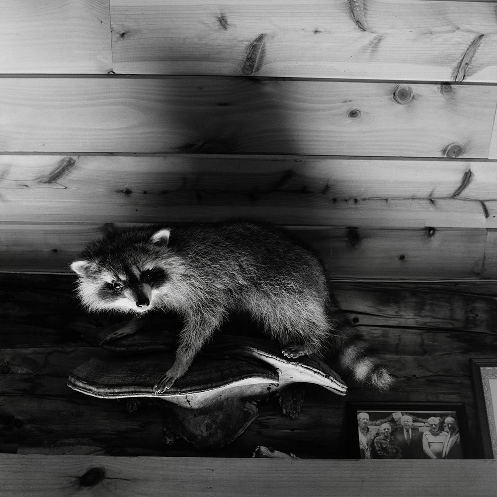 9. Raccoon and Group Portrait, Rod and Game Club, Saranac Lake, NY. 2000. Toned Gelatin Silver Print.