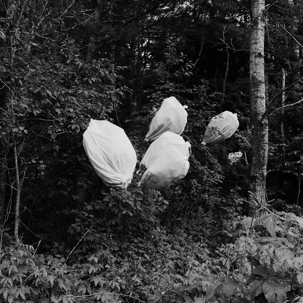 20. Moth Cocoons and Pillowcases, near Paul Smiths, NY. 2001. Toned Gelatin  Silver Print.