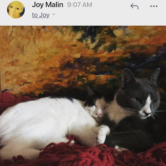 Elliot And Brian Napping in Front of My Painting . . . #catsofinstagram #cat #lovemycats #lovemycatssomuch #catsandart #art #artandcats #meow #catmeow #. #catportraits #portraitsofinstagram