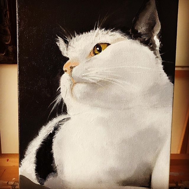 "Hayley's Cat ""Brian"" . #cat #catart #catsofinstagram #ilovemycat #catportraits #paintings #lovecats #meow #fur #furandcats #fluffy #kittycat #kitty #kittenslove #kittens #catoftheday #catsloveinstagram #bigcats #littlekittens #cuddle #art #painting #commissions ##petcommissions #artistforhire #asseeninthenewyorktimes #paws #tails #fluff #dogs"