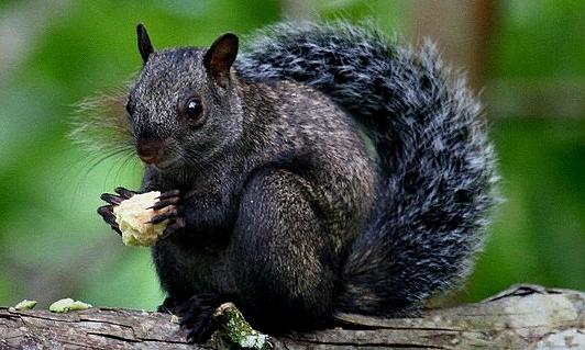 0160-SquirrelTropical.jpg