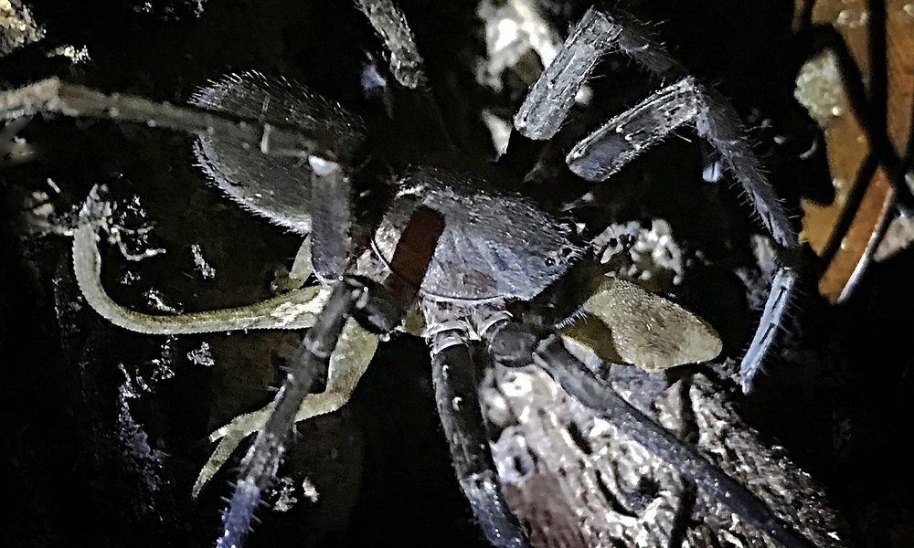 0263-SpiderLizard3.jpg