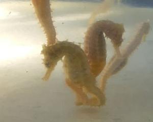 seahorse4.jpg