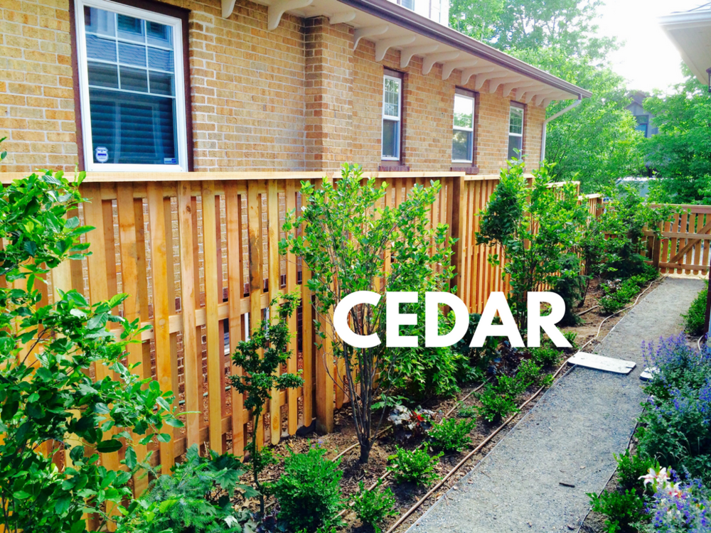 Cedar Gallery Tile 2.....-6.png