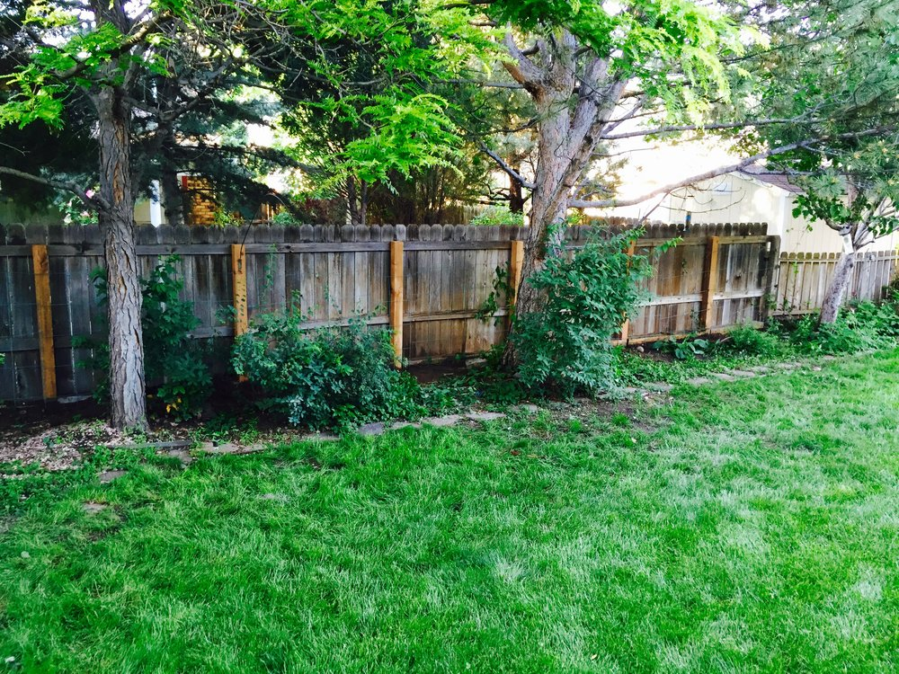 After Repair  - rotted posts have been replaced with new cedar posts. Structural integrity of the fence is back to it's original form. Enough $ saved to take on an additional home improvement project!