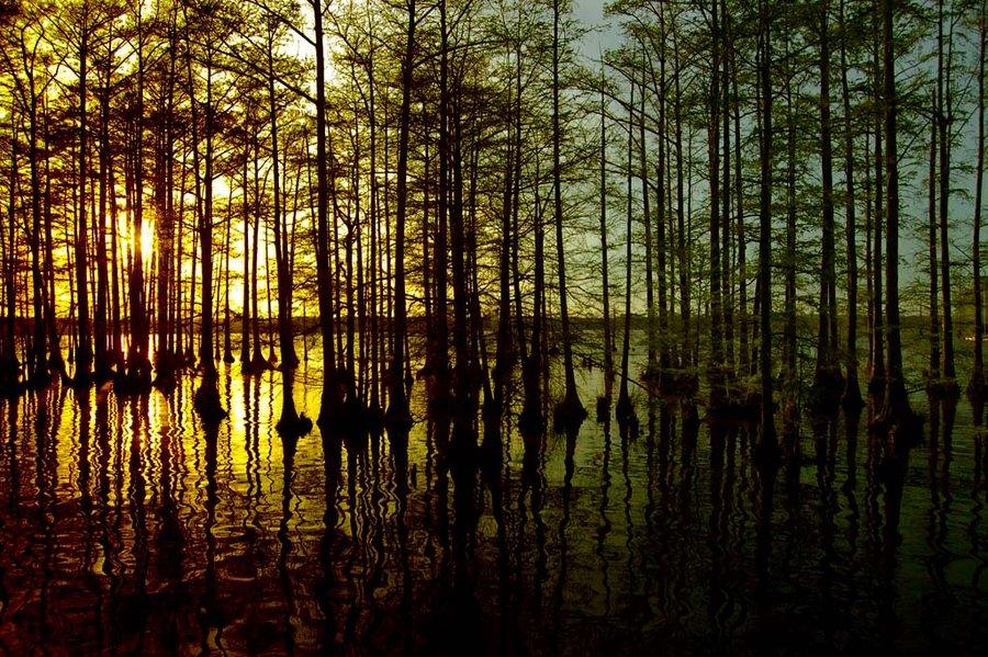Lake Conway, Arkansas |  Photography Credit