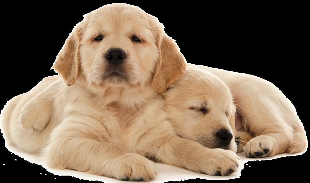 pair-of-pups.png