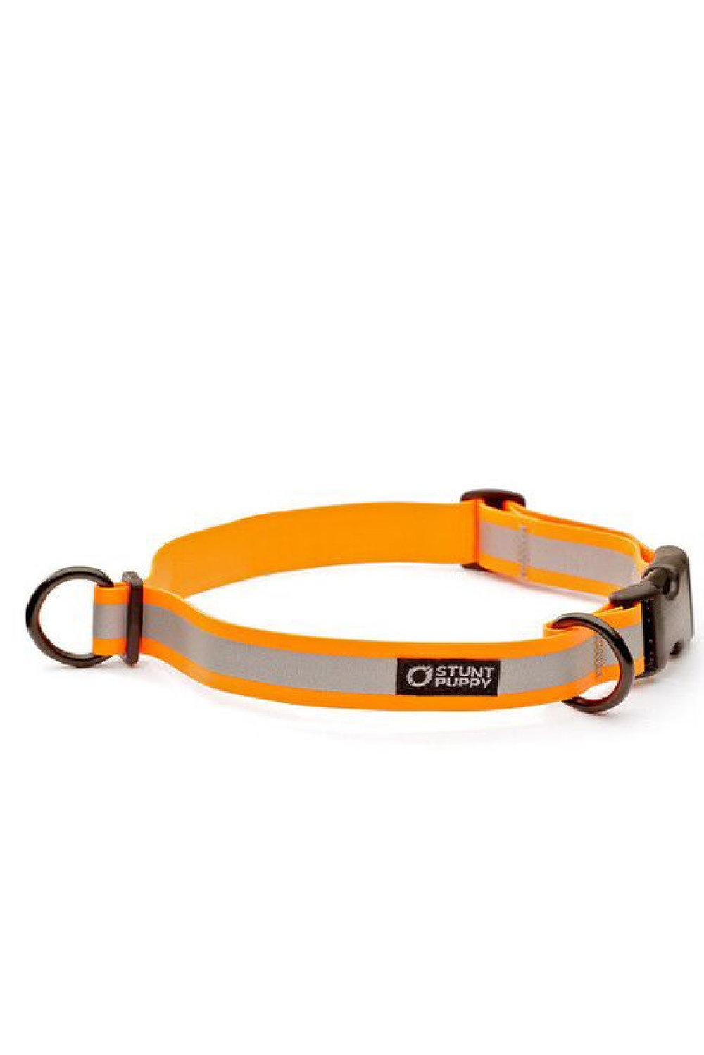 shop online - dog collar