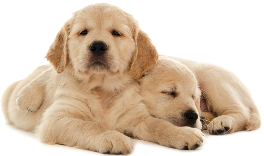 pair-of-pups.png
