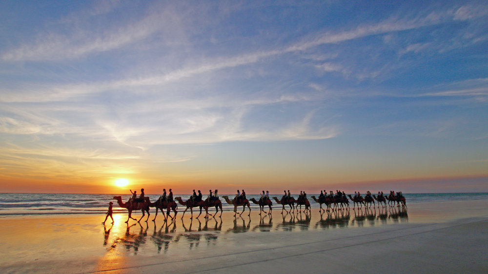 cable-beach-camels
