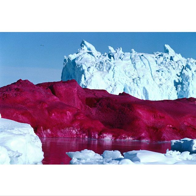 In 2004 Evaristti travelled to Greenland armed with red food colouring with the intention of establishing a provisional Pink State by painting an iceberg in Ilulissat Ice Fjord. That year the ice fjord had just been put on the UNESCO World Natural Heritage List and was also the subject of discussion on environmentally- caused climate change.When the police later knocked on Evaristti's hotel door and asked him to clean up the iceberg, he replied that he would gladly do so when they had cleaned up Thulebasen. He did not hear any more on the matter.