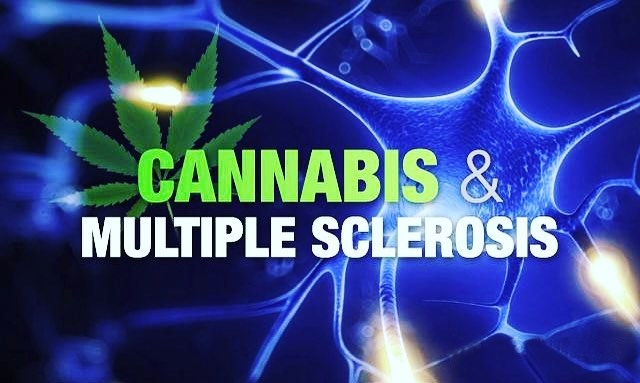 Cannabis reducerede spasticitet allerede i anden behandlingsuge for MS-patienter. ⠀⠀⠀⠀⠀⠀⠀⠀⠀ Spasticitet er et kronisk symptom på multipel sklerose (MS), der bliver værre over tid. Med denne sygdom kan cannabis hjælpe med at reducere smerte, angst og søvnforstyrrelse. Som en add-on-behandling har cannabis fordoblet positive reaktioner fra patienter med multiple sklerose (MS)! ⠀⠀⠀⠀⠀⠀⠀⠀⠀ . ⠀⠀⠀⠀⠀⠀⠀⠀⠀ Cannabis reduced spasticity in the second week of treatment for MS patients. ⠀⠀⠀⠀⠀⠀⠀⠀⠀ Spasticity is a chronic symptom of Multiple Sclerosis(MS) that gets worse over time. With this disease, cannabis can aid in reducing pain, anxiety and sleep disruption. As an add-on therapy, cannabis has doubled positive responses from Multiple Sclerosis(MS) patients!