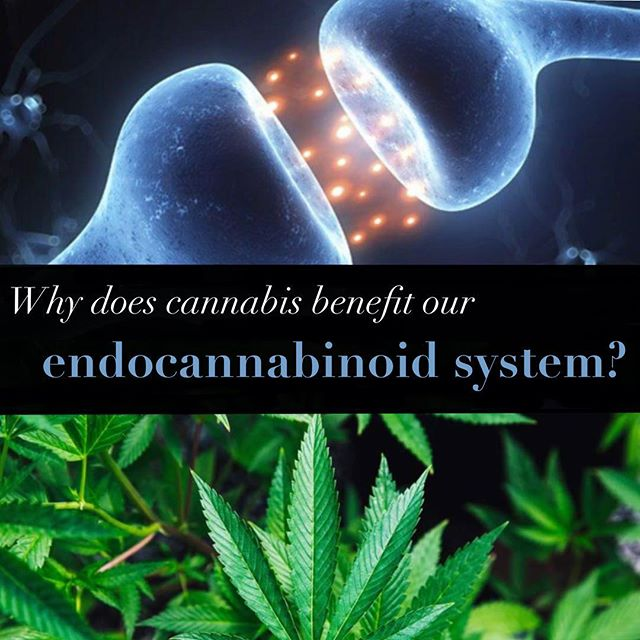 Cannabis produces phytocannabinoids similar to the cannabinoids our body produces and binds to the same receptor sites. Through stress, toxicity, unbalanced diet and poor hygiene your body can become drained and exhausted, and this can cause a number of health issues. These issues can lead to Clinical Endocannabinoid Deficiency meaning your body does not produce enough endocannabinoids on its own. This is where cannabis plays a big roll with phytocanabinoids, because cannabis supports homeostasis by replacing our own endocannabinoids, especially when there is disease present.