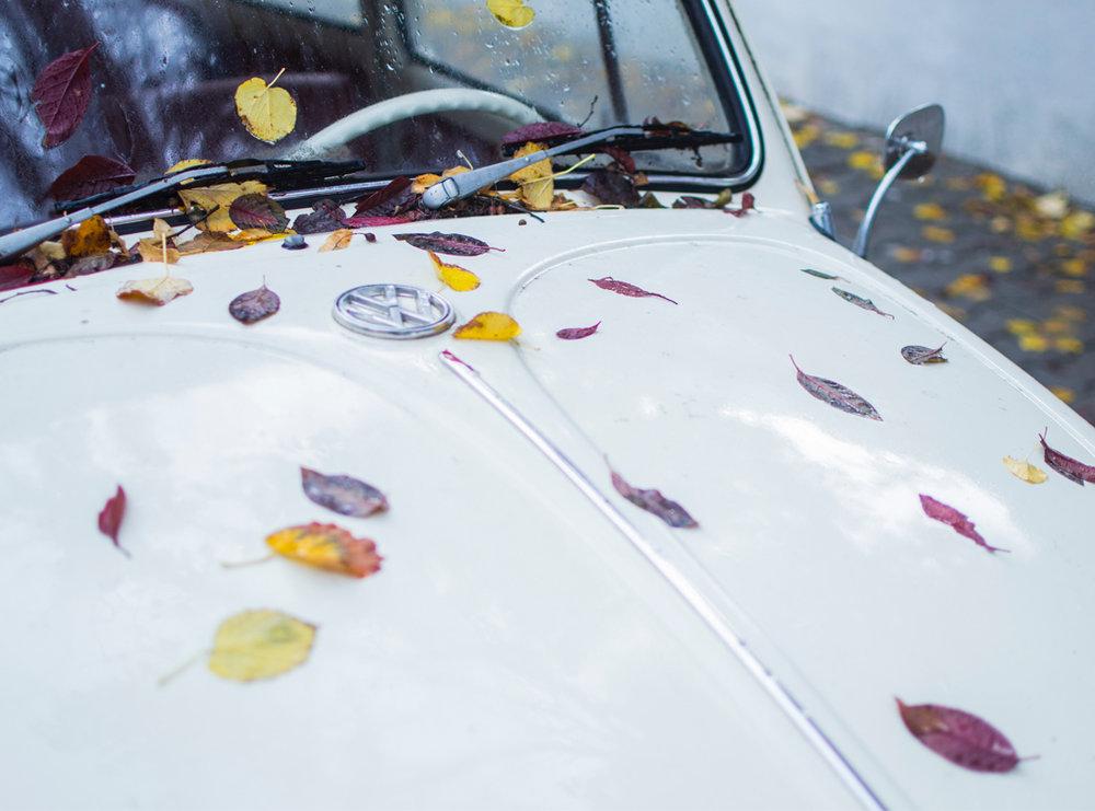 autumnblues_featured.jpg