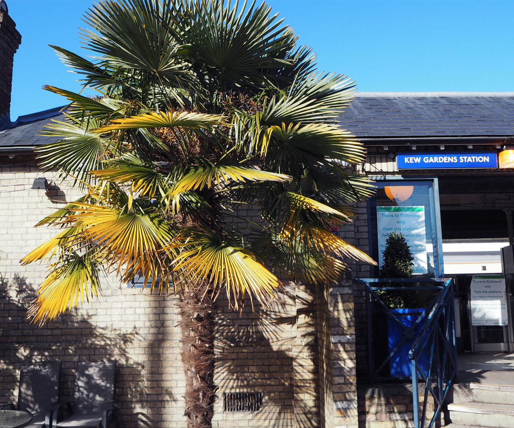 Already at the station you saw your first palm tree