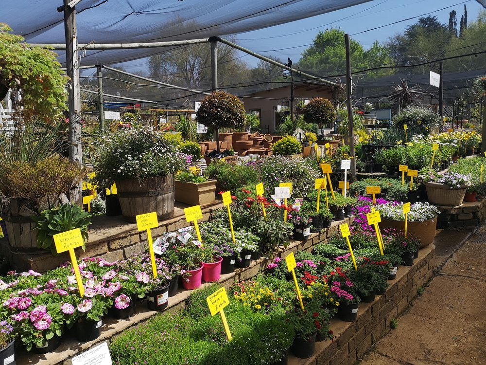 Seasonal Garden Tips! - With new stock of seedlings, perennials and ground covers, it's never been easier to add colour to your garden this Spring with Schäffler's!