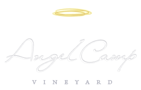 Angel Camp Vineyard
