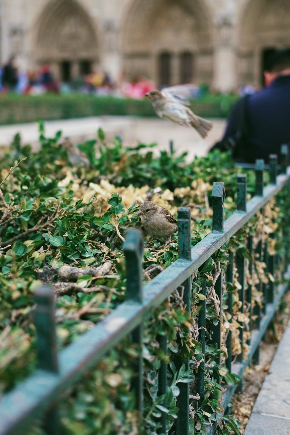 bird at Notre Dame