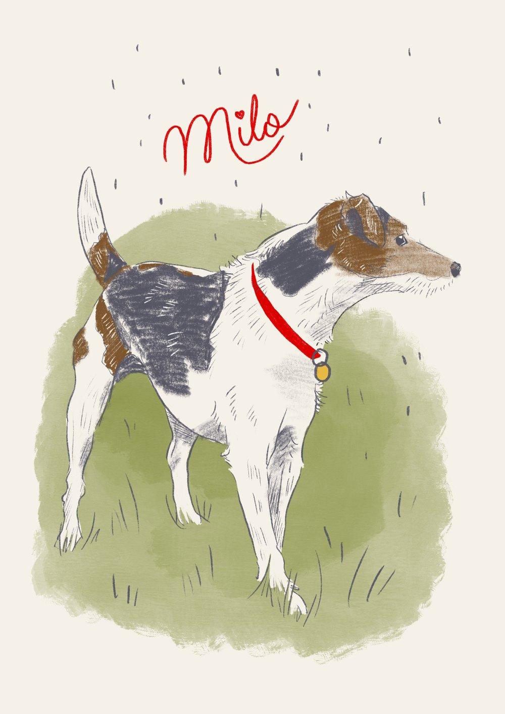 Milo Pet Portrait