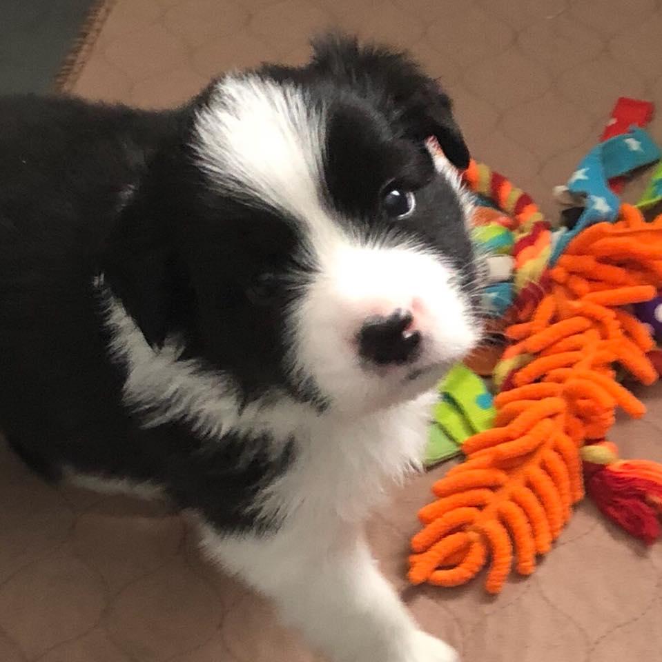 Ralphie - 7 weeks